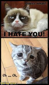 Funny Grumpy Cat Memes - grumpy cat memes best collection of funny grumpy cat pictures