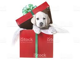 puppy in a gift box stock photo 184284814 istock