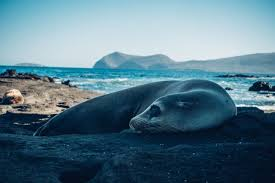 cheap ways to travel images Cheapest way to travel to galapagos a guide to galapagos on a budget jpg