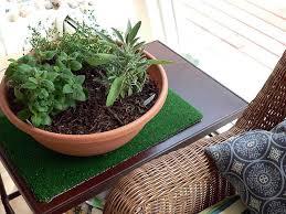how to grow indoor herb garden gardening with charlie