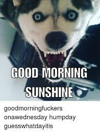 Good Morning Sunshine Meme - good morning sunshine nematic ne goodmorningfuckers onawednesday