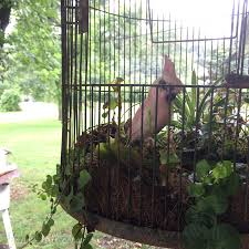 turning a birdcage into a hanging basket tutorial u0026 tips hawk hill
