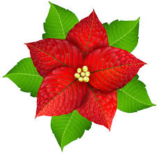 christmas poinsettia transparent png image gallery yopriceville