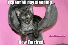 Tired Cat Meme - the kitty is so tired funny cat memes
