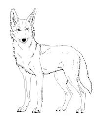 great coyote coloring page 23 in seasonal colouring pages with