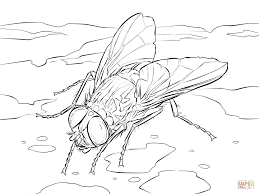 fly coloring page fly coloring pages coloring pages to download