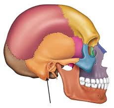 Behind The Ear Anatomy 74 Best Audiology Images On Pinterest Ears Nerve And