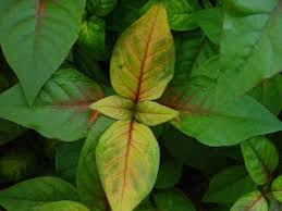 identification and treatment guide for house plant diseases our
