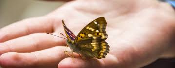butterfly symbolism butterfly meaning and spiritual messages