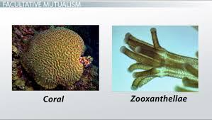 symbiotic relationships mutualism commensalism u0026 parasitism