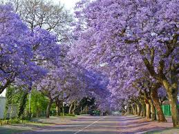 best tree tunnels in the facts wonders