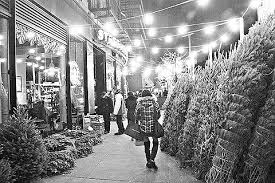 z mation view topic ny trees for sale on columbus ave