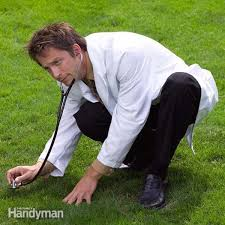 the top 10 perfect lawn maintenance tips family handyman