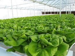 grow room basic considerations growmed university