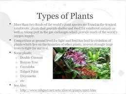 Adaptations Of Tropical Rainforest Plants - tropical rain forest u003dm4bnriie0bk the tropical rainforest rap