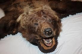 bear rug polar bear rug bear rugjpg black bear taxidermy rug