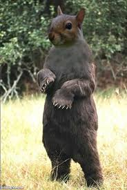 grizzly squirrel pictures freaking news