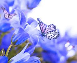 butterfly flowers flowers simply flowers butterfly blue butterflies beautiful