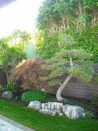 backyard garden with japanese black pine tree japanese black