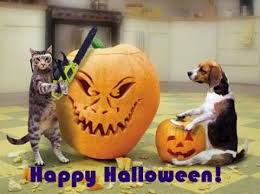 happy halloween quotes wishes sayings for adults funny