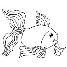25 free printable fish coloring pages