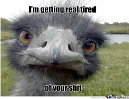 Ostrich Meme - ostrich by raell meme center