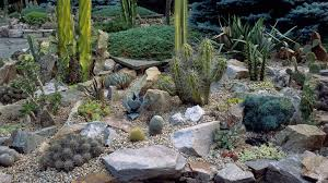 Best Rock Gardens Extraordinary 6 Best Rock Garden Ideas Yard Landscaping With