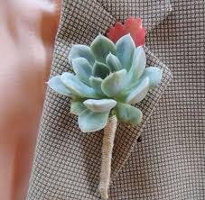wedding boutonniere succulent wedding boutonniere succulents