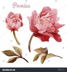 Chinese Birthday Invitation Cards Peonies Leaves Watercolor Can Be Used Stock Illustration 221479492