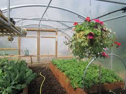 cool lighting vegetable gardening in a greenhouse 2010