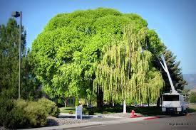 commercial tree care signature landscapes signature landscapes