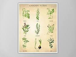 herb chart amazon com garden herbs chart kitchen print art for kitchen