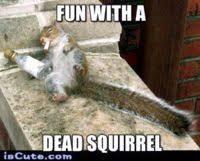 Dead Squirrel Meme - boozed out squirrel meme generator captionator caption generator