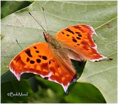 the children s butterfly site