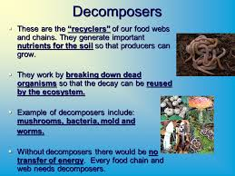 ecological relationships biosphere the biosphere is the