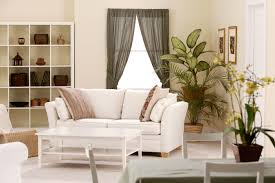 Best Plants For Living Room Vastu Plant For Living Room