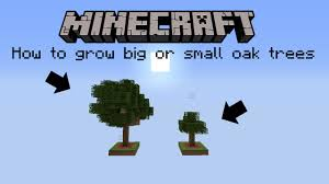 how to grow always big or small oak trees