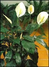 plante d駱olluante chambre plante d interieur depolluante plante dacpolluante plante