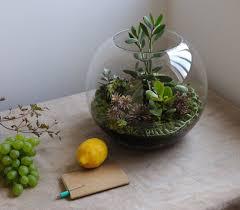 resume modernos terrarios suculentas terrariums fish bowl gardening plantas y flores