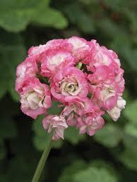 beautiful plants gorgeous flowers from hgtvgardens hgtv