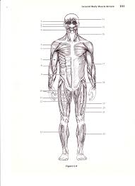 Anatomy And Physiology Muscle Labeling Exercises New Page 1