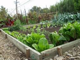 how to start a vegetable garden for beginners how to start a vegetable garden