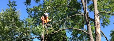 expert tree removal montrose tree services 970 235 2855
