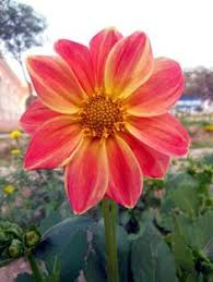 beautiful reflection fotografie pinterest beautiful flowers