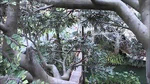 swiss family treehouse magic kingdom walt disney world hd