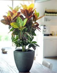 Beautiful House Plants | 29 most beautiful houseplants you never knew about balcony garden web
