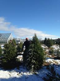 best places to cut down your own christmas tree in new york axs