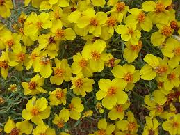 colorado native plant society vascular plants of the gila wilderness