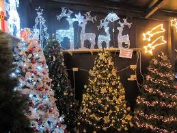 showcase tralee indoor and outdoor trees lights and