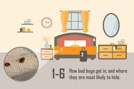 What Kills Bed Bugs For Good Bed Bug Control U0026 Prevention Plunkett U0027s Pest Control